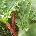 Gluten Free-zer Friday - Freezing Rhubarb & Strawberry Rhubarb Smoothie