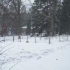 Menu Plan Monday - February 7, 2011